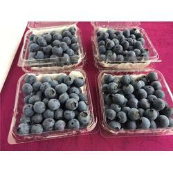 甘肃蓝莓、洪林家庭农场、蓝莓种植图片