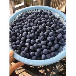 内江蓝莓|洪林家庭农场|蓝莓销售图片