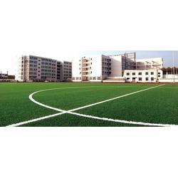 上海人造草坪施工、三龙体育(在线咨询)、人造草坪图片