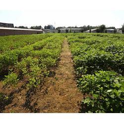 有机物料腐熟剂 光禾生物科技有限公司 梨有机物料腐熟剂图片