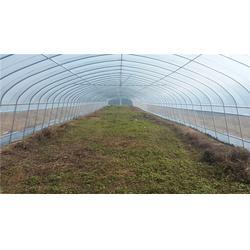 【欣荣温室工程】(图)|洛阳蔬菜大棚配件|洛阳蔬菜大棚图片