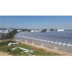 山西阳光板蔬菜温室每亩造价_【欣荣温室工程】_阳光板蔬菜温室图片