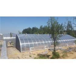 洛阳阳光板玻璃温室造价|阳光板玻璃温室|【欣荣温室工程】图片