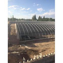 椭圆管大棚安装公司-河南椭圆管大棚 欣荣温室工程图片