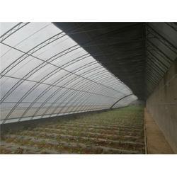 汉中育苗大棚-蔬菜育苗大棚-亿农农业(优质商家)图片