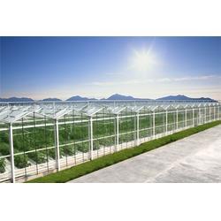 钢架大棚公司、亿农农业(在线咨询)、湖北钢架大棚图片
