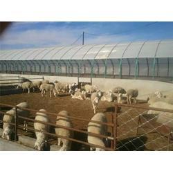 许昌养猪大棚-亿农农业-养猪大棚哪家好图片