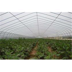 建造西瓜大棚|阿拉尔西瓜大棚|亿农农业(查看)图片