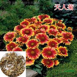 室内植物花卉种子、快活林苗木(在线咨询)、花卉种子图片