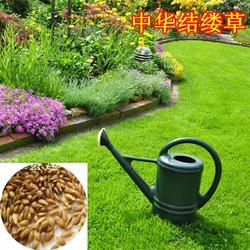 黑麦草种子、快活林苗木、矮生黑麦草种子图片