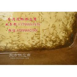 台湾泥鳅幼苗泥鳅水花台湾纯种泥鳅繁殖泥鳅孵化苗图片