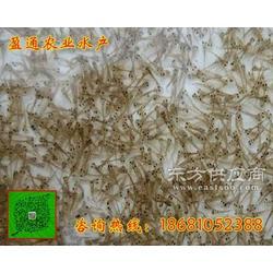 苍溪县台泥鳅活体自养种鳅母鳅养殖场供应图片
