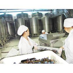 果酒加工酿酒-果酒加工-香城酒业水果加工图片