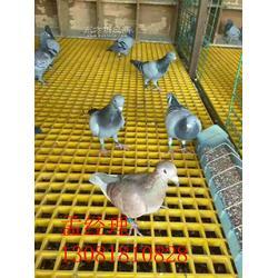 养猪舍地板格栅,养殖社清洁格栅地板,洗浴中心地板格栅图片