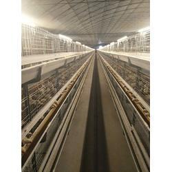 立式肉鸡笼子-运盈机械鸡笼加工厂-肉鸡笼子图片