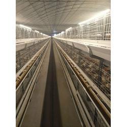 运盈机械生产厂家 立式肉鸡笼子-肉鸡笼子图片