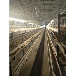 立式肉鸡笼子-肉鸡笼子-运盈机械鸡笼生产厂家图片