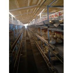 肉鴨籠-運盈機械雞籠生產廠家-肉鴨籠報價圖片