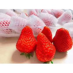 草莓网套机生产线-草莓网套机-买网套机到龙口同力达图片
