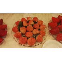 九九草莓苗_九九草莓苗_海之情农业图片