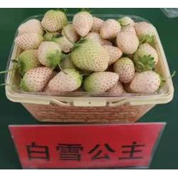 海之情、江西草莓苗、天仙醉草莓苗图片