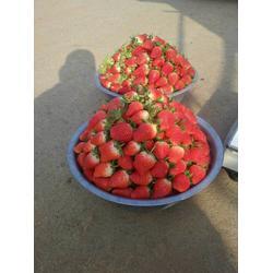 丰香草莓苗,海之情农业(在线咨询),丰香草莓苗多少钱图片