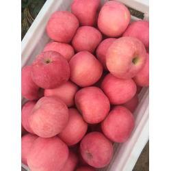 2公分苹果苗|2公分苹果苗|海之情农业(查看)图片