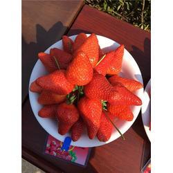 大地草莓苗出售_大地草莓苗_海之情农业(多图)图片