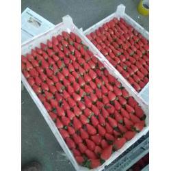 山东奶油草莓苗出售,山东奶油草莓苗,海之情农业(多图)图片