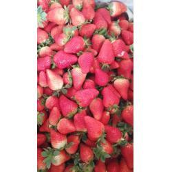 甘肃大地草莓苗_海之情农业(优质商家)_大地草莓苗种植基地图片