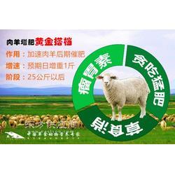羊喂什么饲料上膘快怎么养育肥羊长得快图片