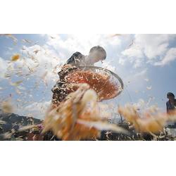 红虾皮生产商、东莞生态园虾皮、富华海产品加工厂图片