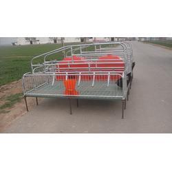 猪用复合产床报价、北京猪用复合产床、强旺养殖设备品质优良图片