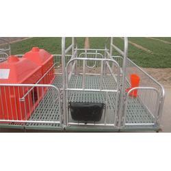晟鑫养殖设备长期供货,猪用复合产床规格,濮阳猪用复合产床图片