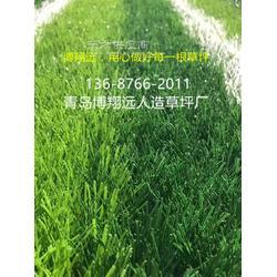 楼顶地毯草坪哪里有卖的-怎么买合适【已解决】图片