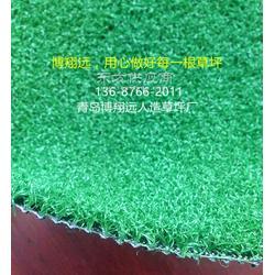 庭院地毯草坪-怎么买合适【已解决】图片