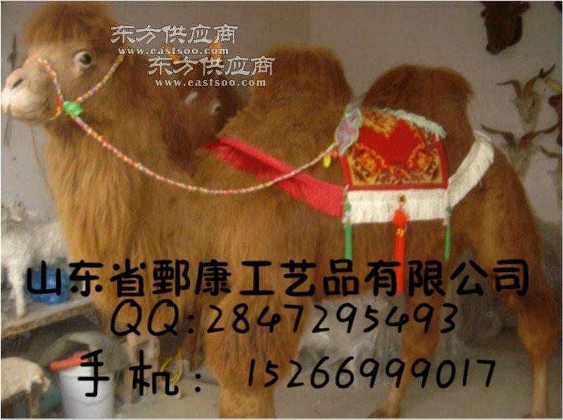 骆驼标本图片
