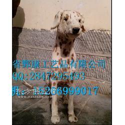 宠物犬标本加工制作图片