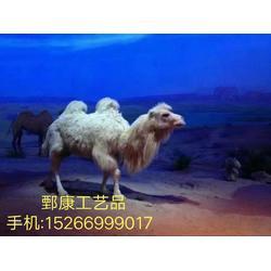 沙漠之舟骆驼,沙漠骆驼标本制作一件包邮图片