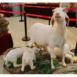 仿真山羊标本室内装饰景观摆件山羊图片