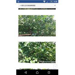 百恩生物(图)、广谱生物除草剂、生物除草剂图片
