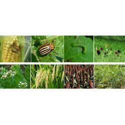 生物杀虫效果控制期长-百恩生物-生物杀虫图片