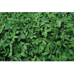 生物肥料适期追肥|百恩生物(在线咨询)|生物肥料图片