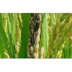 百恩生物(图),生物杀虫剂的特点,生物杀虫剂图片