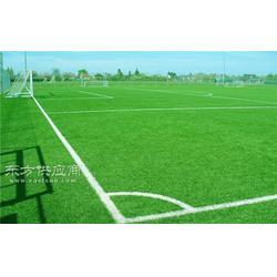 东营篮球场塑料草坪低的图片