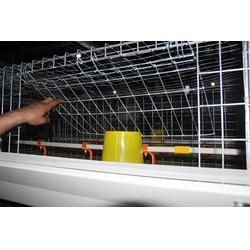 方圆笼具,信阳养鸭笼具,养鸭笼具厂商图片