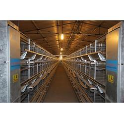 方圆笼具,种鸡笼,种鸡笼生产厂家图片