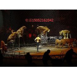 海狮表演出租马戏团动物巡演租赁图片