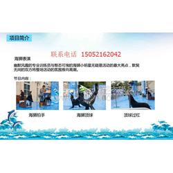海狮海豹租赁海洋生物展出租创意活动方案海洋展图片