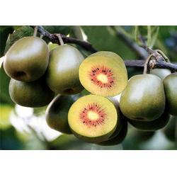 仪征猕猴桃哪家好、江苏康泉农业、猕猴桃图片